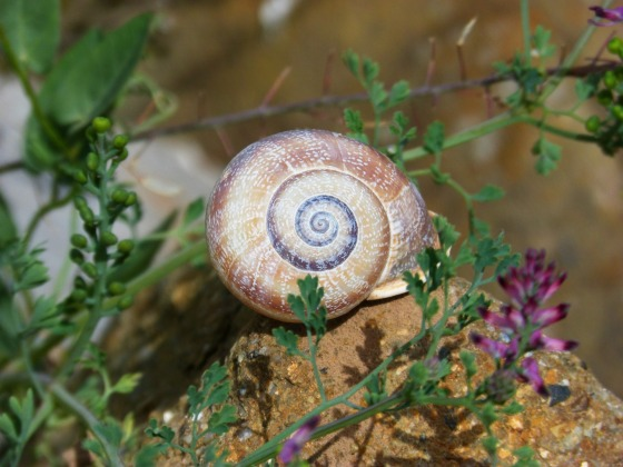 snail-1346717_1920